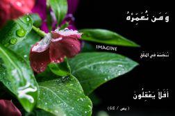 IMG_0116 copy