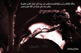 IMG_9960 copy